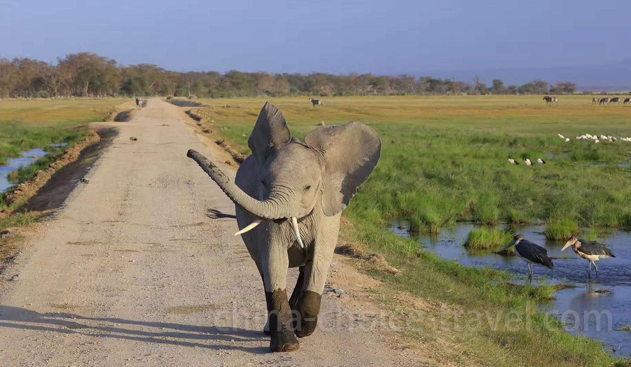 肯尼亚旅游