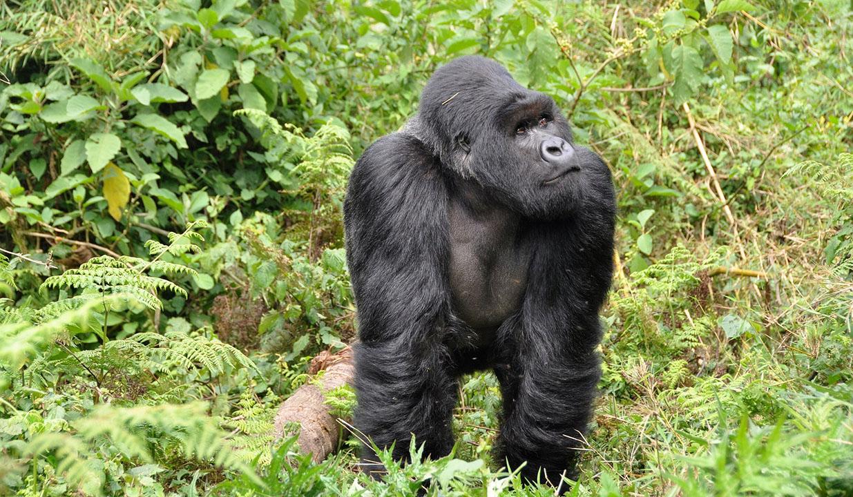 乌干达、卢旺达旅游