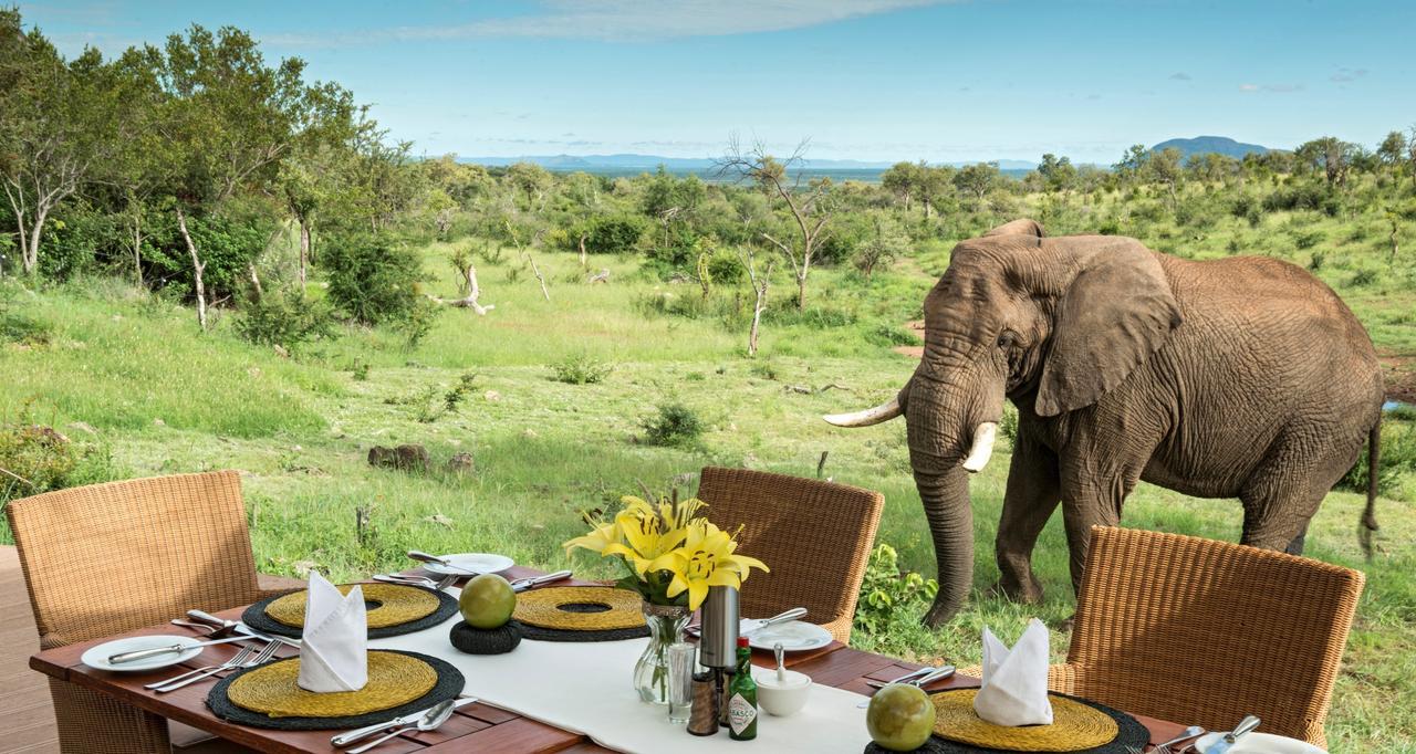 南非 南非  第3天马迪克韦野生动物保护区
